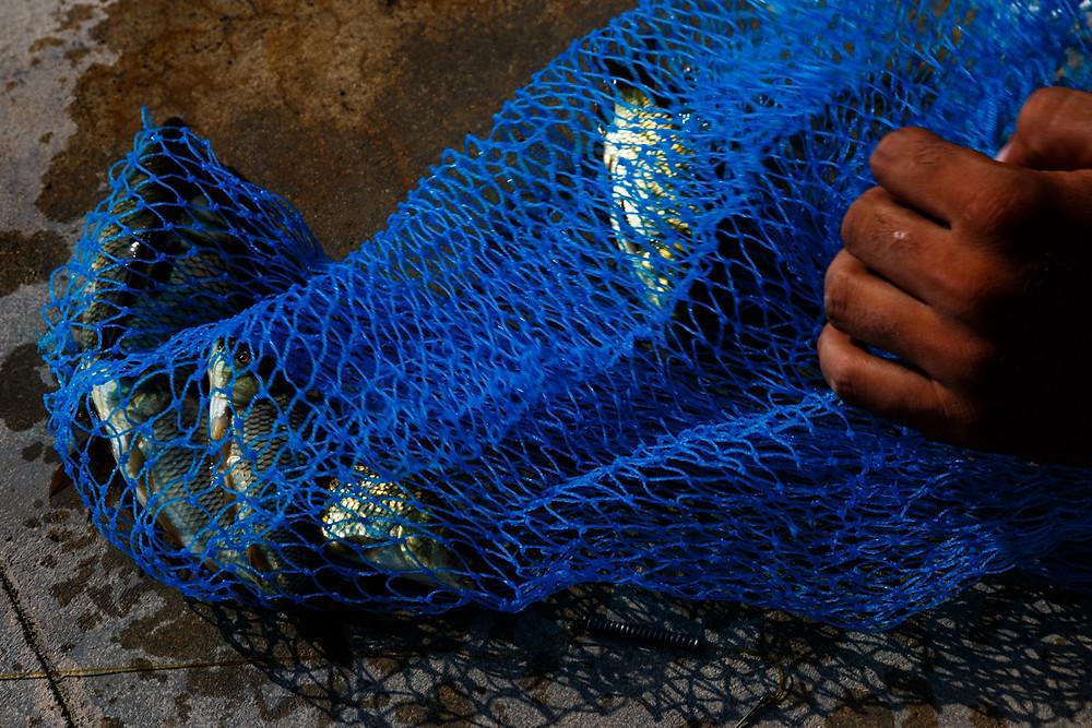 Рыбацкий улов на озере Дал, Шринагар, Кашмир, Индия