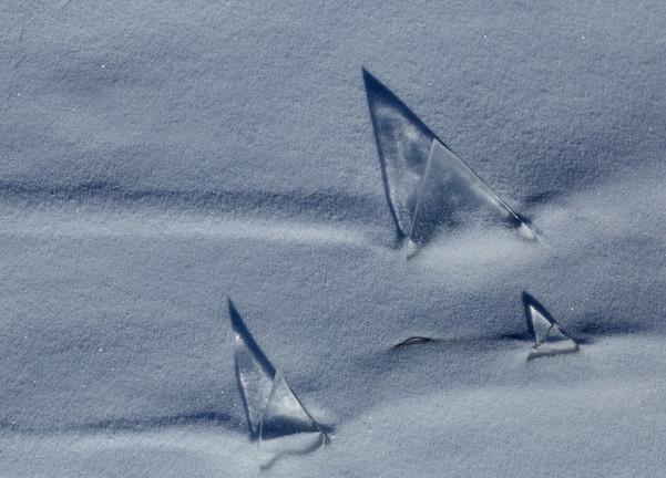 Ледяные паруса