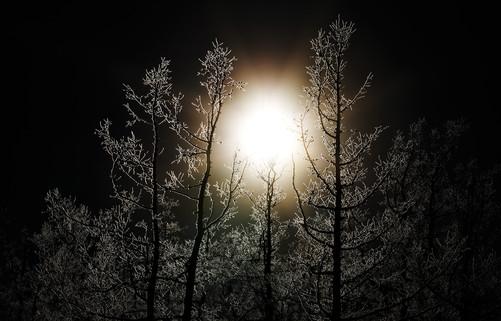Контраст тьмы и нежности