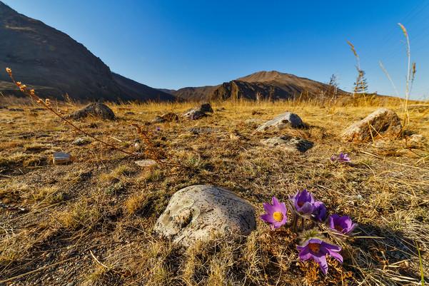 Вид на Сарминское ущелье с первоцветами