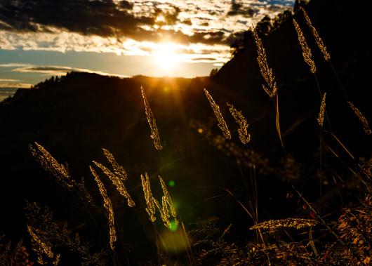 Закатный свет на траве