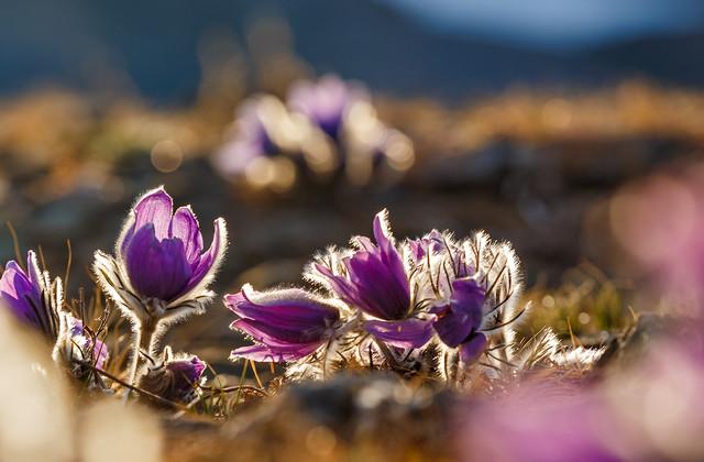 Нежные первоцветы в мае