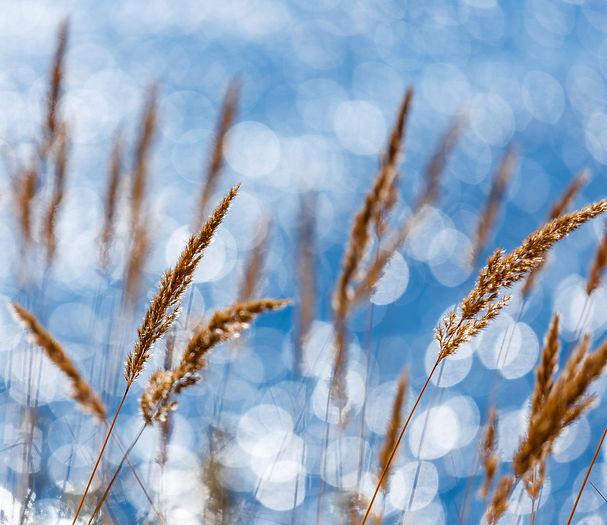Байкальские травы