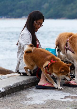 Собаки Гонконга