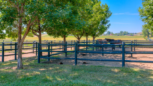 39-5860-2_Exterior_Horses_in_Paddock_5TM