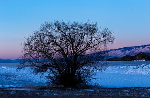 Дерево на мысе Уюга после заката, Байкал