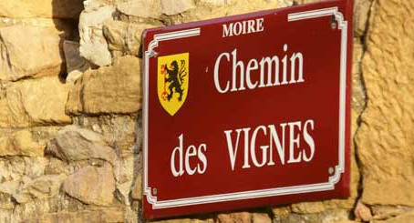 Featured in Wine Searcher on Beaujolais Blanc