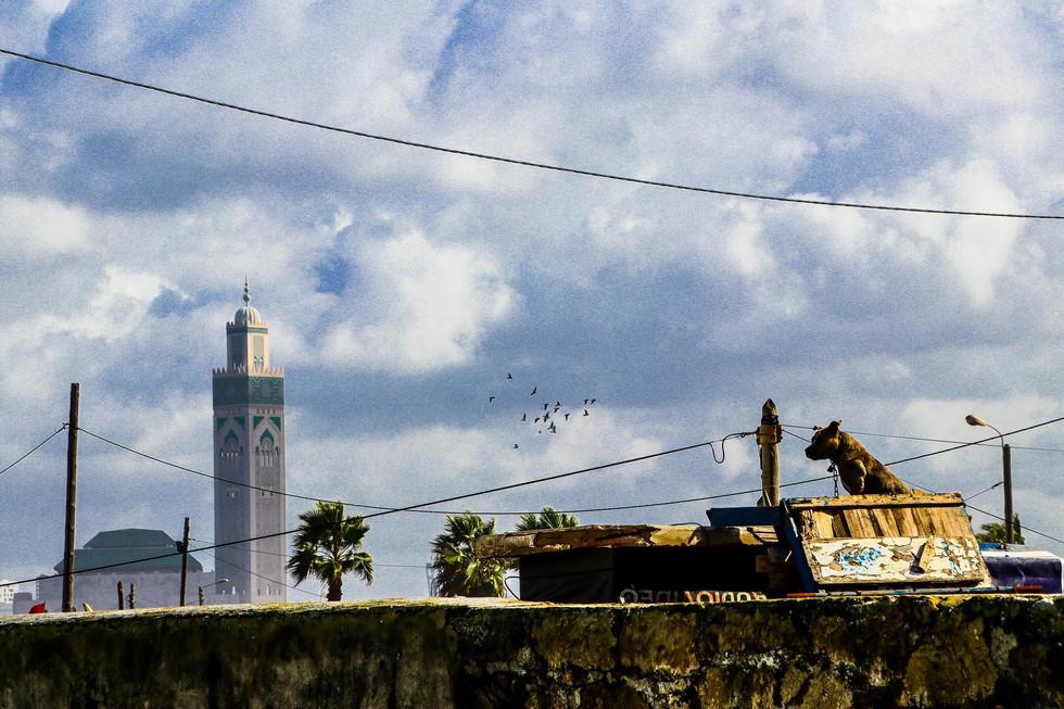 Casablanca | November 2018
