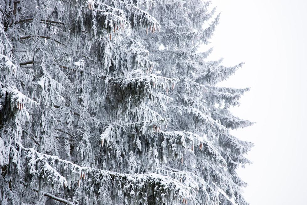 Winterberg| Dezember 2020