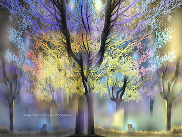 Night and Day Surreal Photograph