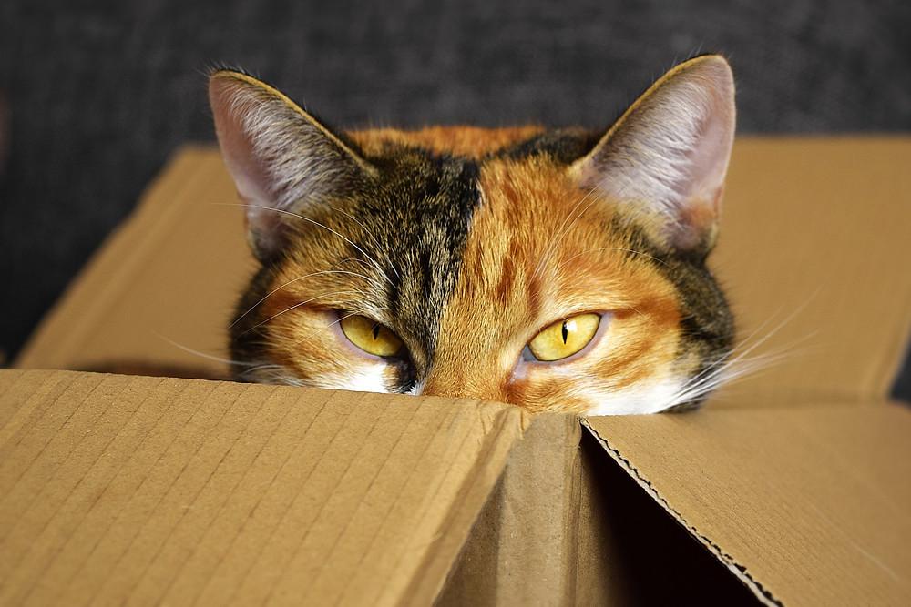 Thinking outside the box YE Associates blog