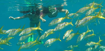 snorkeling off of Big Pine Key