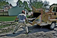Tree Services Ames, IA