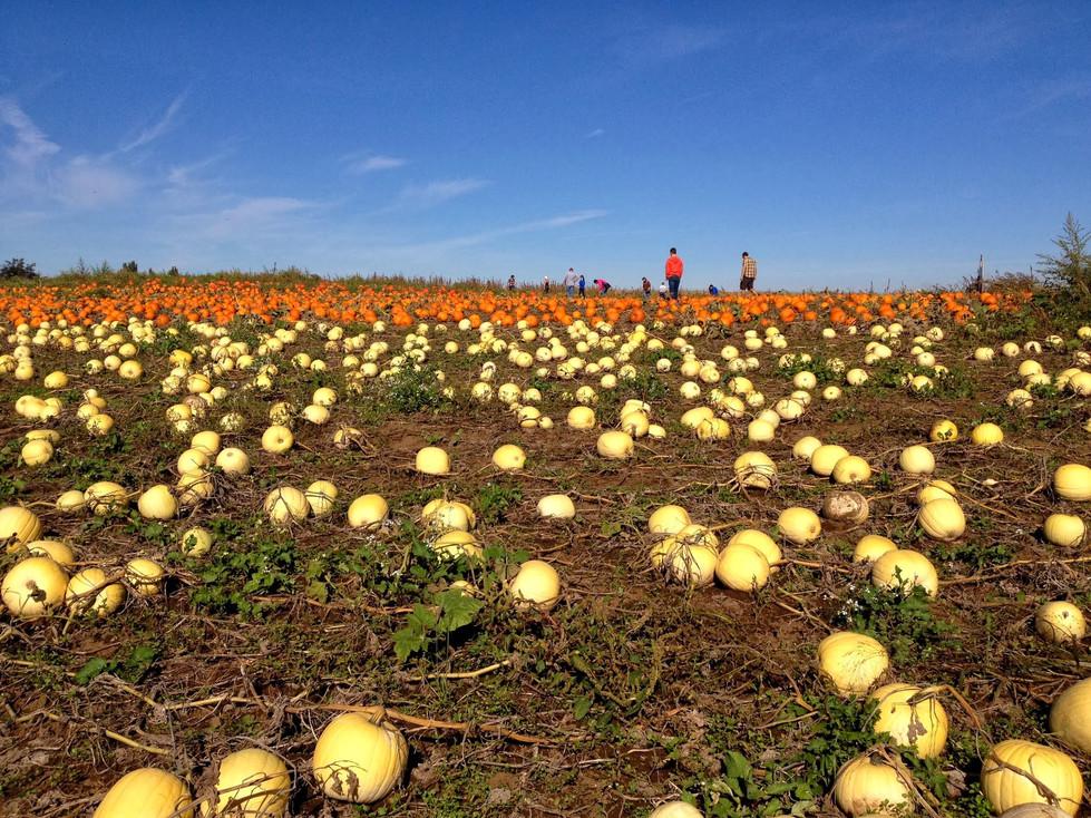 Five Ways to Celebrate Fall near Portland, Ore.