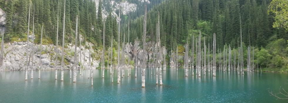 Kaindy Lake, (Flooded forest)
