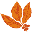 Camocim-Logo_edited.png