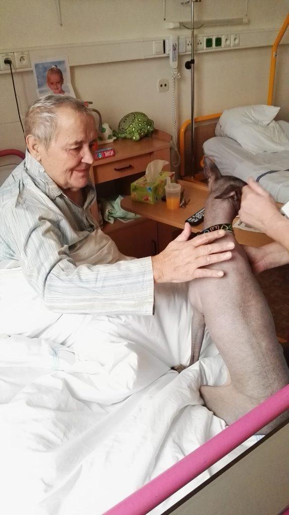 felinoterapie a canisterapie