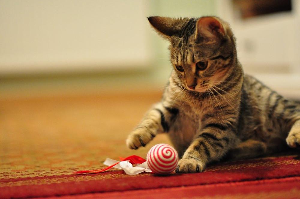 Socializace koček