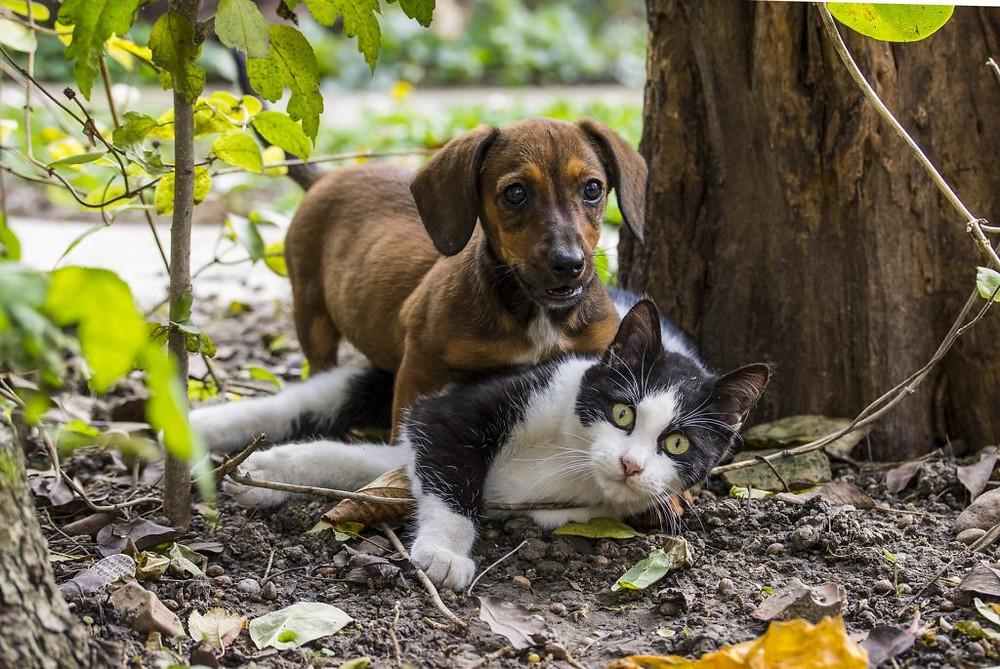 Kočky a psi