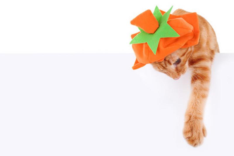 Halloweenský kočičí speciál
