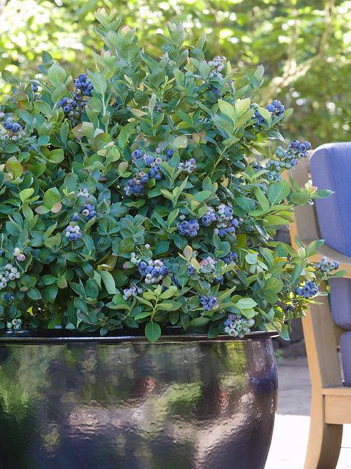 Blueberry Peach Sorbet Bushel and Berry®