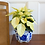Thumbnail: Poinsettia White