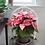 Thumbnail: Poinsettia Pink
