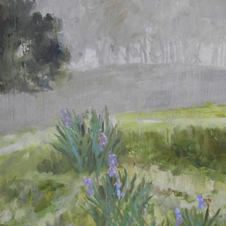 Iris Fog