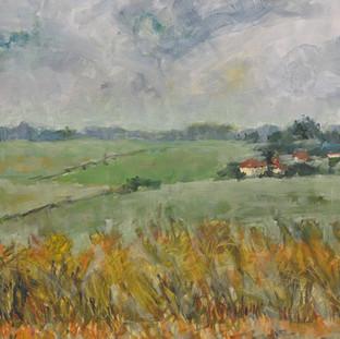 Hungarian Cornfield