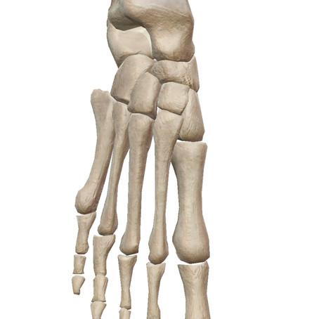 足には体の約1/4の骨がある!