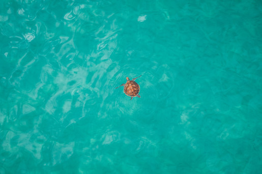 Ross Long Photography - Green Turtle Man