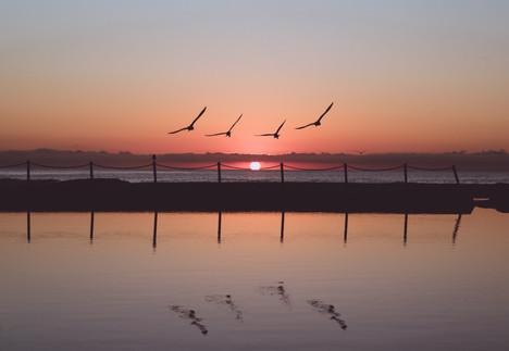 Ross Long Photography - Mona Vale Sunris