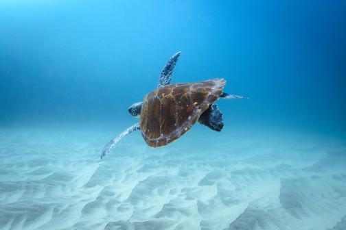 Ross Long Photography - Turtle Seal Rocks.jpg