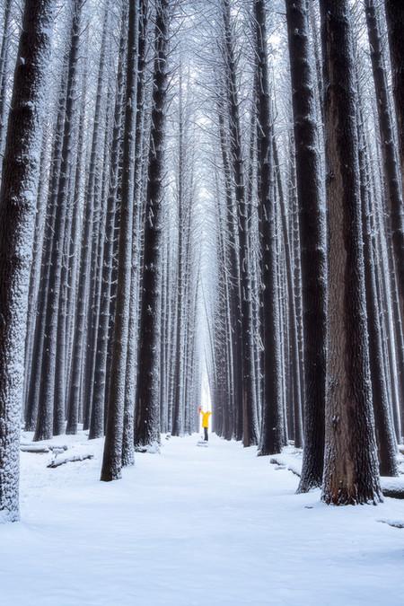 Ross Long Photography - Sugar Pine Walk.jpg