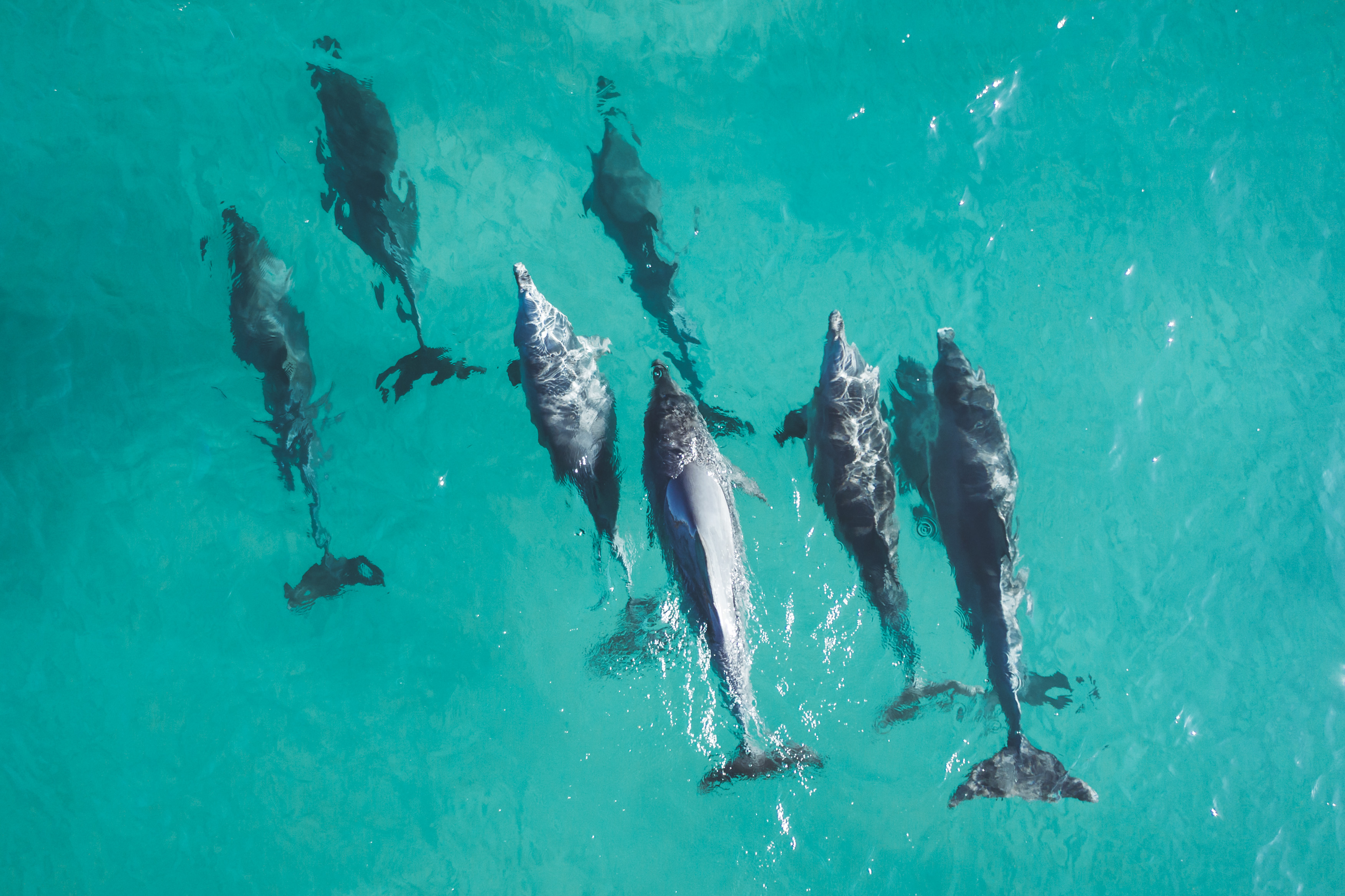 Ross Long Photography - Dolphins