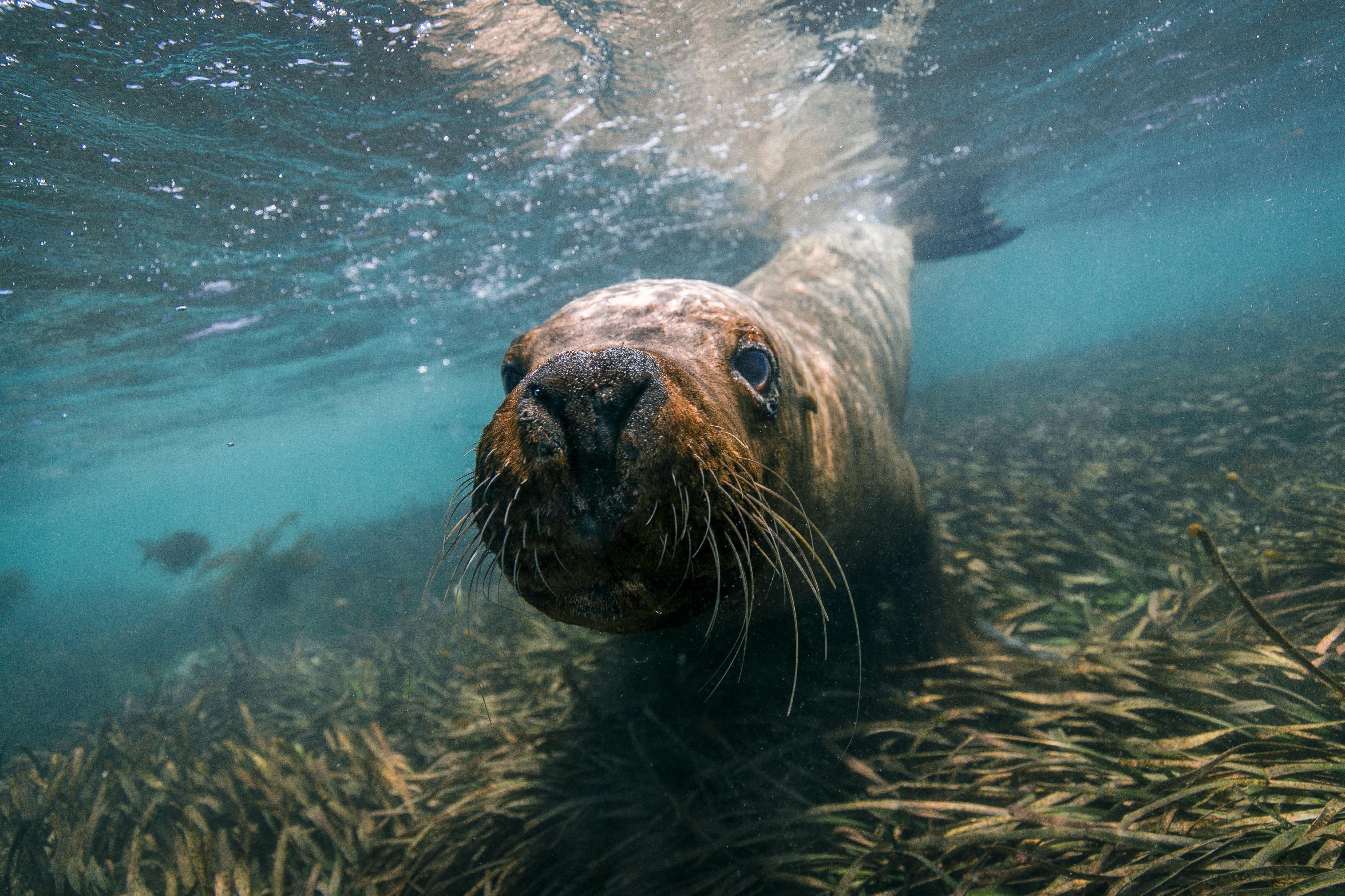 Western Australia - Sea Lion