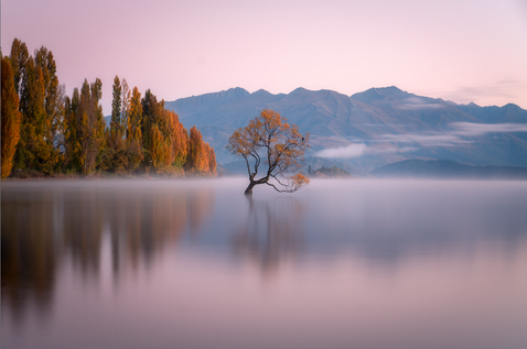 Ross Long Photography - Wanaka.png