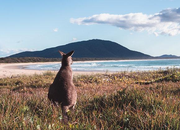 Diamond Head Kangaroo - RLWL001 - Ross Long Photography - Print Sale