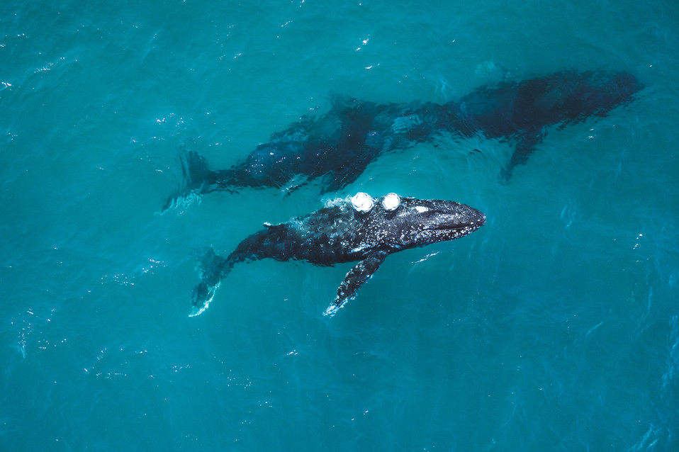 Ross Long Photography - Humpback Whale S