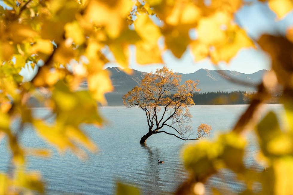 Ross Long Photography - Wanaka.jpg