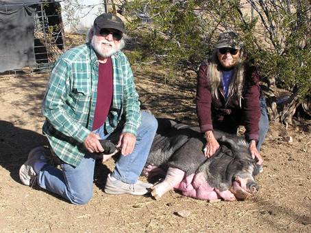 Jobs They Love: Pig Sanctuary Operators
