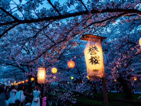 Gather Under the Cherry Trees