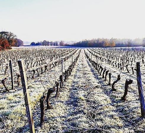 vigne hiver.png