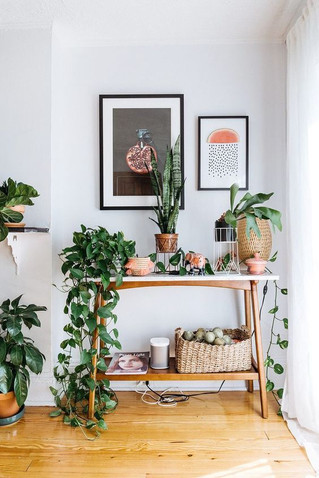 Hot trend: Indoor plants & how to keep them alive