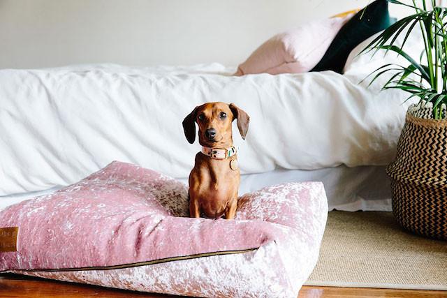 Nice Digs dog bed