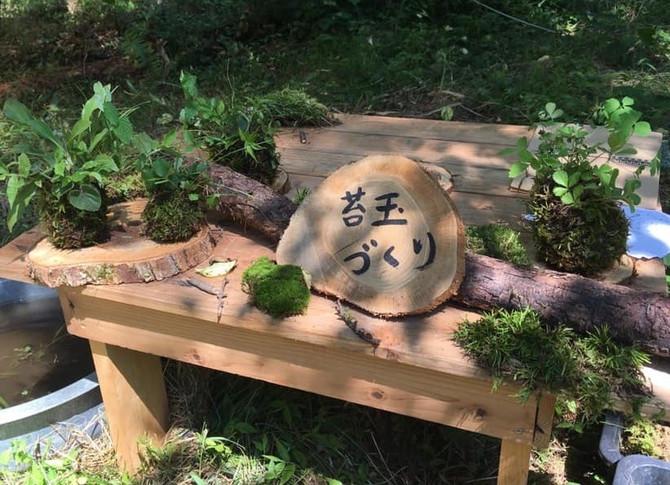 \苔玉作り教室始まりました!!/