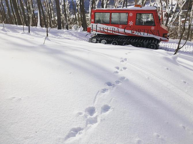 雪上車アドベンチャーライドの楽しみ方 〜🐇野生動物の足跡編🦌