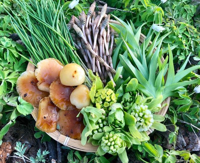 山菜の季節がやってきました🌿