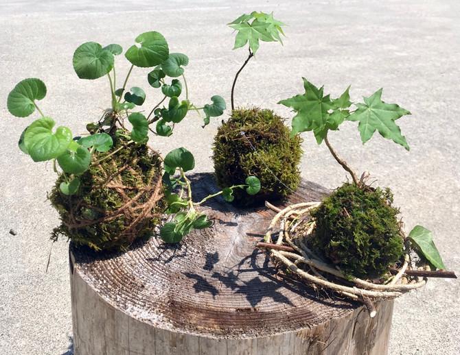 魔女と森歩き① 苔むす水の森散策と苔玉作り