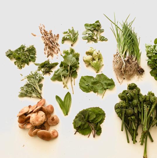 ⑥本日の収穫♪どんな山菜が採れるかはその日のお楽しみ。多い日には10種類以上採れ